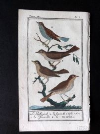 Buffon 1785 Antque Hand Colored Bird Print. Nightingale, Warbler 9-3